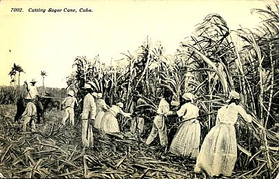 cane field image